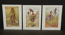 Flower Fairies Cicely M. Barker 3 Prints  c1940 G1#13