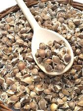 130 x Moringa Oleifera Seeds Finest Organic Quality Hand Selected NON-GMO Herb