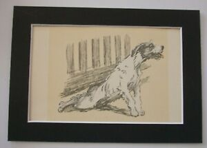 Wolfhound Dog Print Cecil Aldin Under The Fence 1928 5x7 Bookplate Matted