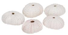 NaDeco® Seeigel Gehäuse weiß 5 Stück ca. 4cm | Dekoseeigel | Seeigelgehäuse | Ec