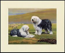 OLD ENGLISH SHEEPDOG TWO DOGS LOVELY DOG PRINT MOUNTED READY TO FRAME