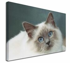 More details for face of a beautiful birman cat x-large 30