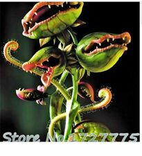 100 Seeds Venus Fly Trap Dionaea Muscipula Carnivorous Plant Seeds