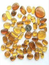 Clean Natural Burmite Amber Insect 100 million years Cretaceous (Untreated)