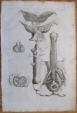 Cowper Bidloo Huge Impressive Engraving Anatomy Genitals Man Plate 47 - 1737