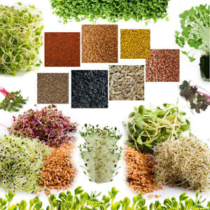 Organic Seeds for Sprouting Sprouts, Healthy Micro greens, SUPERFOOD - 22+ seeds