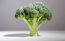 1000 DE CICCO BROCCOLI Di Cicco Brassica Oleracea Capitata Vegetable Seeds +Gift