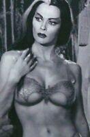 Vintage Lily Munster Pin Up Photo 826b Odd Strange & Bizarre