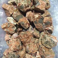 Wholesale 2lb Bulk Leopard Skin Jasper Rough Natural Stones