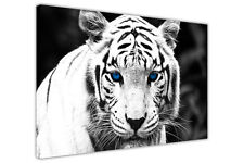 WHITE TIGER BLUE EYES ANIMAL PRINTS CANVAS ART PICTURES HOME DECORATION ARTWORK