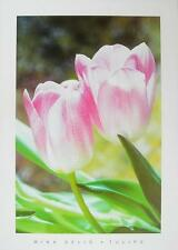 Mina Selis Tulipes Poster Kunstdruck Bild 50x70cm - Kostenloser Versand