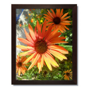 Set of 12 - 8x10 Dark Walnut Wood Picture Frames and Clear Glass -  $15 SHIPPING