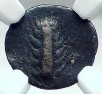 METAPONTION in LUCANIA Authentic Ancient 470BC SIlver Greek Coin OX NGC i77825