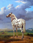"Vintage Leopard Appaloosa Horse painting CANVAS ART PRINT 36""X 24"""