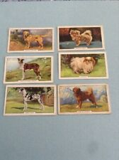 Gallaher Cigarettes 1938 Six Dogs Second Series Cards OO