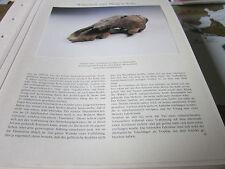 Köln Archiv 5 Alltag 5013 Schädel eines Tanzbären 13. Jahrhundert