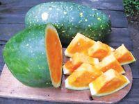 Rare Yellow Moon & Stars Giant Watermelon 10 Fresh Organic Seeds * Unique *