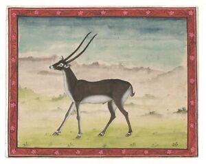 Wild Blackbuck Peinture Miniature Indien Fait à la Main Aquarelle Papier Deco