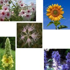 Fünf wunderbare seltsame Blumen, Kuriositäten !