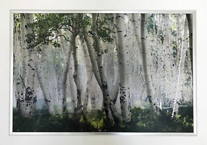 """""""Up in the Clouds"""" by Mike Jones - Birch Trees - Framed Canvas"""