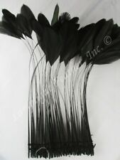 Long Black Stripped Coque Millinery Feathers 10 inch Pack of 25