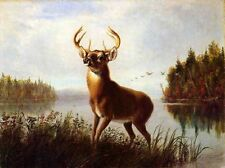 Oil painting arthur-fitzwilliam-tait-eight-point-stag deer in landscape canvas