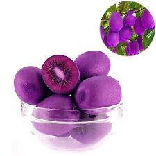 CHIC New 100PCS/Bag Imported Purple Kiwi Seeds Milk Taste Delicious Fruit Seeds