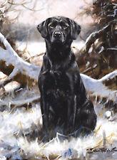 Black Labrador Retriever, Christmas cards pack of 10 by John Trickett. C338x