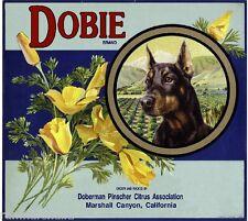 Marshall Dobie Doberman Pinscher Dog Orange Citrus Fruit Crate Label Art Print