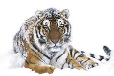POSTER Siberian Tiger