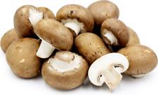 10gr/0,4(oz)Brown Button Mushroom (Portobello) Mycelium Spawn Dried Seeds