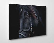 Horses Framed Art Prints