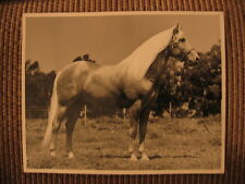 "Grand Champion Stallion Palomino Quarter Horse ""Top Hat"" Original Photo"