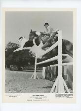 TATTOOED POLICE HORSE Original Movie Still 8x10 Disney Sandy Sanders 1964 2204