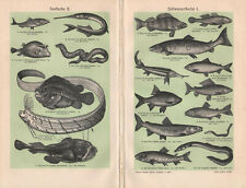 1909. MARINE, SEA FISHES & FRESHWATER FISHES. Antique lithography
