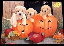 Golden Retrievers Puppy Dogs Pumpkins Apples Fuzzy - Halloween Greeting Card New