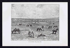 Wagon Train & Horses in the Alkaline Valley, Black Hills - 1894 Historical Print