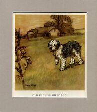 ~ Old English Sheepdog ~ Vernon Stokes Colour Print Genuine Vintage 1947