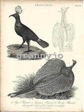 Original 1824 Copperplate Engraving of The Argus, Impeyan & Parraka Pheasant # 3