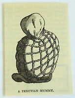 small 1883 magazine engraving ~ PERUVIAN MUMMY, Peru