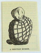 small 1883 magazine engraving ~ PERUVIAN MUMMY, Peru