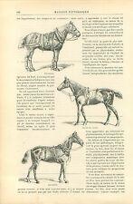 Cheval Course Percheron Arabe Pierre Loti Octave Feuillet GRAVURE OLD PRINT 1892