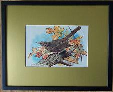 Basil Ede, 20''x16'' frame, Bird framed wall art, Blackbird print, garden birds
