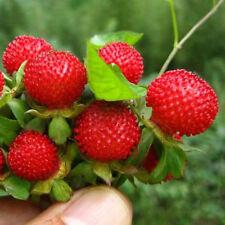 500pcs Seeds Mini Wild Strawberry Duchesnea Green Natural Heirloom Plant Seed