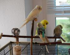 Sitzstangen Praktisches Vogelzubehör für Vogelkäfig Wellensittich Nymphensittich