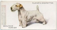 Sealyham Terrier Dog Canine Pet 1920s  Ad Trade Card