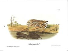 Short-Eared Owl Vintage Bird Print by John James Audubon #46