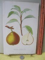 Vintage Print,DUCHESSE DE BERRY,French Fruit,Tree
