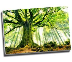 """Beautiful Strange Green Tree Canvas Print Wall Art 30x20"""" A1"""