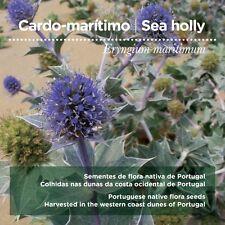 Eryngium maritimum seeds
